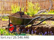 Wheelbarrow full of soil in a garden. Стоковое фото, фотограф Nobilior / Фотобанк Лори