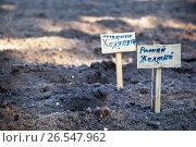 Купить «Таблички с названиями сортов высаженного картофеля на поле», эксклюзивное фото № 26547962, снято 14 июня 2017 г. (c) Наталья Осипова / Фотобанк Лори