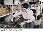 Купить «Women selecting nuts in store», фото № 26552190, снято 30 марта 2020 г. (c) Яков Филимонов / Фотобанк Лори