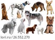 Купить «different dog breeds», фото № 26552270, снято 10 декабря 2019 г. (c) Яков Филимонов / Фотобанк Лори