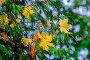 Россия, осень, листопад в парке, фото № 26569706, снято 23 июня 2017 г. (c) glokaya_kuzdra / Фотобанк Лори
