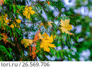 Купить «Россия, осень, листопад в парке», фото № 26569706, снято 26 января 2020 г. (c) glokaya_kuzdra / Фотобанк Лори