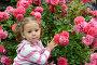 Трехлетняя задумчивая девочка на фоне куста цветущих роз. Портрет, фото № 26570362, снято 22 июня 2017 г. (c) Ирина Борсученко / Фотобанк Лори