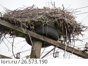 Купить «Nest of white storks at top of a cable column with wires», фото № 26573190, снято 12 июня 2017 г. (c) Anatoly Timofeev / Фотобанк Лори