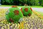 Клумба с футбольными мячами на Крестовском острове. Срнкт-Петербург, эксклюзивное фото № 26574326, снято 25 июня 2017 г. (c) Александр Щепин / Фотобанк Лори