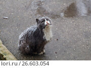 Купить «Homeless cat on street», фото № 26603054, снято 24 марта 2013 г. (c) Gennadiy Iotkovskiy / Фотобанк Лори