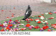 Doves of peace walking on scattered rose petals. Стоковое видео, видеограф worker / Фотобанк Лори