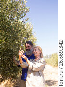 Купить «Happy couple examining olive oil in farm», фото № 26669342, снято 22 марта 2017 г. (c) Wavebreak Media / Фотобанк Лори