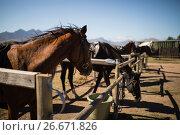 Купить «Horses standing in the ranch», фото № 26671826, снято 28 марта 2017 г. (c) Wavebreak Media / Фотобанк Лори