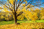 Colorful autumn tree, фото № 26681074, снято 4 октября 2016 г. (c) Sergey Borisov / Фотобанк Лори