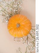 Купить «Желтая тыква и сухие белые цветы крупным планом. Осенний натюрморт на светло-бежевом фоне», фото № 26691502, снято 19 июня 2019 г. (c) Olesya Tseytlin / Фотобанк Лори
