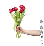 Купить «bouquet of reds tulips in a hand against a white», фото № 26694494, снято 11 марта 2012 г. (c) Tatjana Romanova / Фотобанк Лори