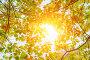 colorful autumn leaves, фото № 26697346, снято 25 июля 2017 г. (c) Сергей Петерман / Фотобанк Лори
