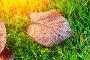 autumn leaves on grass, фото № 26697382, снято 25 июля 2017 г. (c) Сергей Петерман / Фотобанк Лори