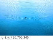 Купить «Круги на спокойной поверхности воды от водомерки», фото № 26705346, снято 17 июля 2017 г. (c) Татьяна Белова / Фотобанк Лори