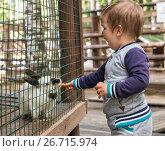 Купить «Маленький мальчик 2 года кормит кролика сквозь сетку вольера», фото № 26715974, снято 18 июля 2017 г. (c) Юлия Бабкина / Фотобанк Лори