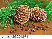 Купить «Две кедровые шишки, орехи и зеленые ветви сибирского кедра на деревянном фоне крупно (лат. Pinus sibirica)», фото № 26730978, снято 3 августа 2017 г. (c) Виктория Катьянова / Фотобанк Лори
