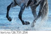 Ноги серой лошади, скачущей по воде в облаке брызг. Стоковое фото, фотограф Абрамова Ксения / Фотобанк Лори