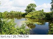 Купить «Уточка на луговом озере», фото № 26744534, снято 31 июля 2015 г. (c) Игорь Камаев / Фотобанк Лори