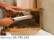 Купить «Beekeeper hot knife cuts wax honeycombs», фото № 26745242, снято 7 августа 2017 г. (c) Володина Ольга / Фотобанк Лори