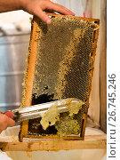 Купить «Beekeeper hot knife cuts wax honeycombs», фото № 26745246, снято 7 августа 2017 г. (c) Володина Ольга / Фотобанк Лори
