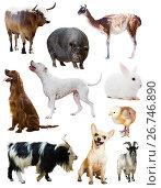 Купить «Set of dogs and other farm animals», фото № 26746890, снято 27 марта 2019 г. (c) Яков Филимонов / Фотобанк Лори