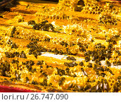 Купить «The Honey bees on wax combs, outdoors», фото № 26747090, снято 7 августа 2017 г. (c) Володина Ольга / Фотобанк Лори