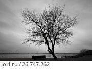 Купить «Silhouette of bare tree over dark cloudy sky», фото № 26747262, снято 20 февраля 2017 г. (c) EugeneSergeev / Фотобанк Лори