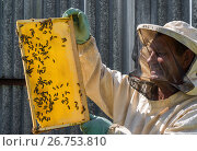 Купить «The beekeeper keeps in his hands wax frame with honey», фото № 26753810, снято 7 августа 2017 г. (c) Володина Ольга / Фотобанк Лори