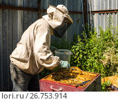 The beekeeper takes out the honeycomb from hive. Стоковое фото, фотограф Володина Ольга / Фотобанк Лори