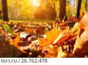 Купить «fallen leaves in autumn forest», фото № 26762478, снято 19 октября 2018 г. (c) Сергей Петерман / Фотобанк Лори