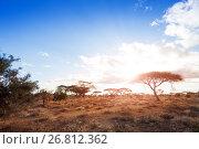 Купить «Landscapes of dry and arid African savannah», фото № 26812362, снято 17 августа 2015 г. (c) Сергей Новиков / Фотобанк Лори