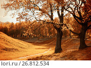 Купить «Autumn nature of city park in sunny weather - beautiful autumn landscape with golden autumn trees», фото № 26812534, снято 26 мая 2017 г. (c) Зезелина Марина / Фотобанк Лори