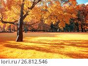 Купить «Autumn colorful landscape in sunny autumn landscape park lit by sunlight -autumn park in soft sunlight», фото № 26812546, снято 3 октября 2016 г. (c) Зезелина Марина / Фотобанк Лори