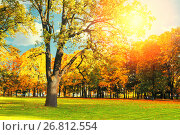 Купить «Autumn picturesque landscape in vintage tones- sunny autumn landscape park lit by sunshine-autumn park in sunshine», фото № 26812554, снято 25 апреля 2015 г. (c) Зезелина Марина / Фотобанк Лори