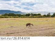 Купить «hyena and thomsons gazelles in savannah at africa», фото № 26814614, снято 17 февраля 2017 г. (c) Syda Productions / Фотобанк Лори