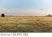 Купить «group of herbivore animals in savannah at africa», фото № 26815182, снято 18 февраля 2017 г. (c) Syda Productions / Фотобанк Лори
