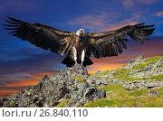 Купить «griffin against sunset sky», фото № 26840110, снято 17 июля 2011 г. (c) Яков Филимонов / Фотобанк Лори
