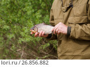 Fish roach in the hand of an angler on the river bank. Стоковое фото, фотограф Алексей Спирин / Фотобанк Лори
