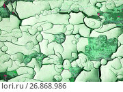 Купить «Текстура потрескавшейся краски зеленого цвета», фото № 26868986, снято 27 мая 2017 г. (c) Зезелина Марина / Фотобанк Лори