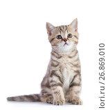 Купить «Cute scottish shorthair kitten cat isolated», фото № 26869010, снято 21 августа 2017 г. (c) Оксана Кузьмина / Фотобанк Лори