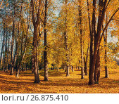 Купить «Autumn park in sunny weather - colorful autumn landscape», фото № 26875410, снято 9 октября 2016 г. (c) Зезелина Марина / Фотобанк Лори