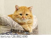 Купить «Рыжий, домашний кот устроился на лежанке», эксклюзивное фото № 26882690, снято 26 августа 2017 г. (c) Dmitry29 / Фотобанк Лори