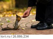 Купить «Москва,мужчина кормит белку в парке Царицыно», фото № 26886234, снято 1 октября 2016 г. (c) glokaya_kuzdra / Фотобанк Лори