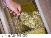 Купить «green buckwheat shop», фото № 26908050, снято 14 декабря 2019 г. (c) Яков Филимонов / Фотобанк Лори