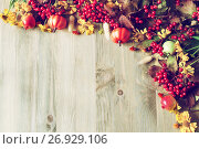 Купить «Thanksgiving day autumn background with seasonal autumn nature berries, pumpkins, apples and flowers», фото № 26929106, снято 6 сентября 2017 г. (c) Зезелина Марина / Фотобанк Лори