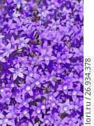 Купить «Цветочный фон», фото № 26934378, снято 19 июня 2017 г. (c) Икан Леонид / Фотобанк Лори