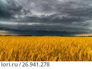 Купить «Round storm cloud over a wheat field. Russia», фото № 26941278, снято 14 июля 2017 г. (c) Володина Ольга / Фотобанк Лори