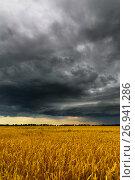 Купить «Black thunderstorm cloud above the wheat field», фото № 26941286, снято 14 июля 2017 г. (c) Володина Ольга / Фотобанк Лори