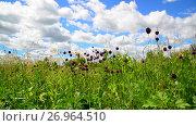 Купить «Wild garlic flowers against beautiful sky», видеоролик № 26964510, снято 22 июня 2017 г. (c) Володина Ольга / Фотобанк Лори